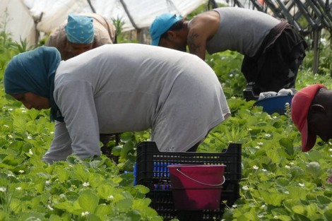 فرص عمل للفلاحات باسبانيامقابل 37 أورو يوميا