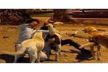 في حادث مأساوي كلاب تنهش طفل بكلميمة و الساكنة تحتج على ذلك .