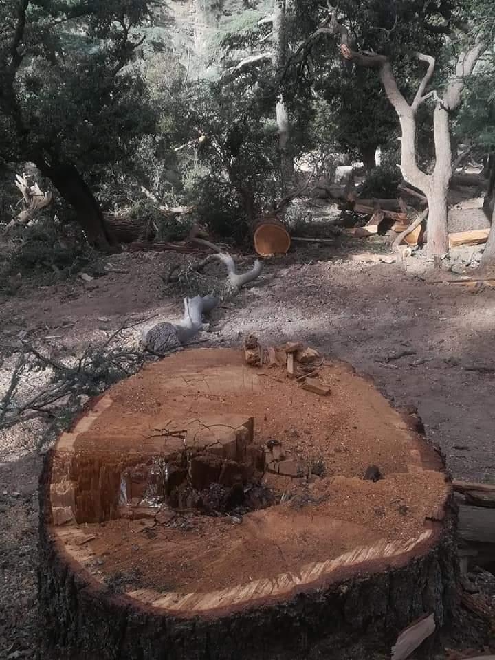 هل رفعت مصالح وزارة المياه والغابات بميدلت الراية البيضاء ولم تعد قادرة على حراسة الغابة؟؟؟