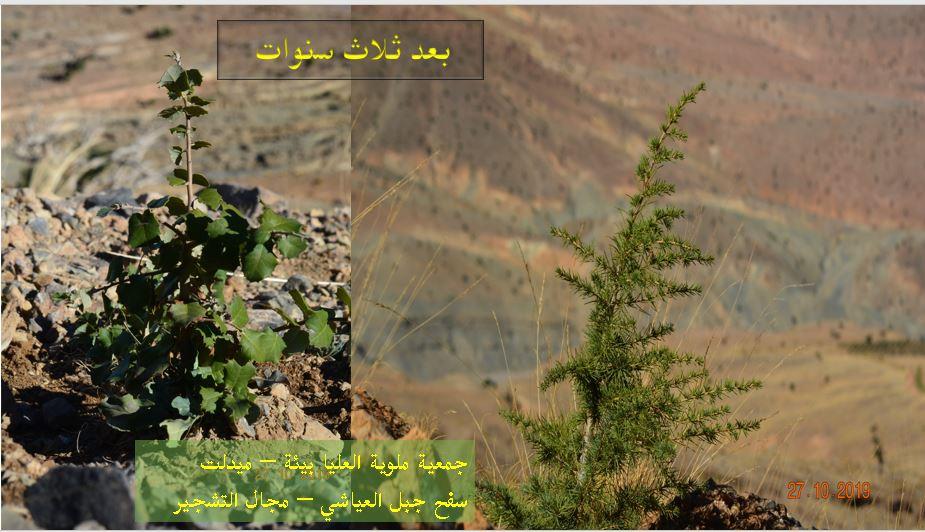 ميدلت : نشاط بيئي كبير تحت الجبل.. ؟ ؟ من توقيع جمعية ملوية العليا بيئة