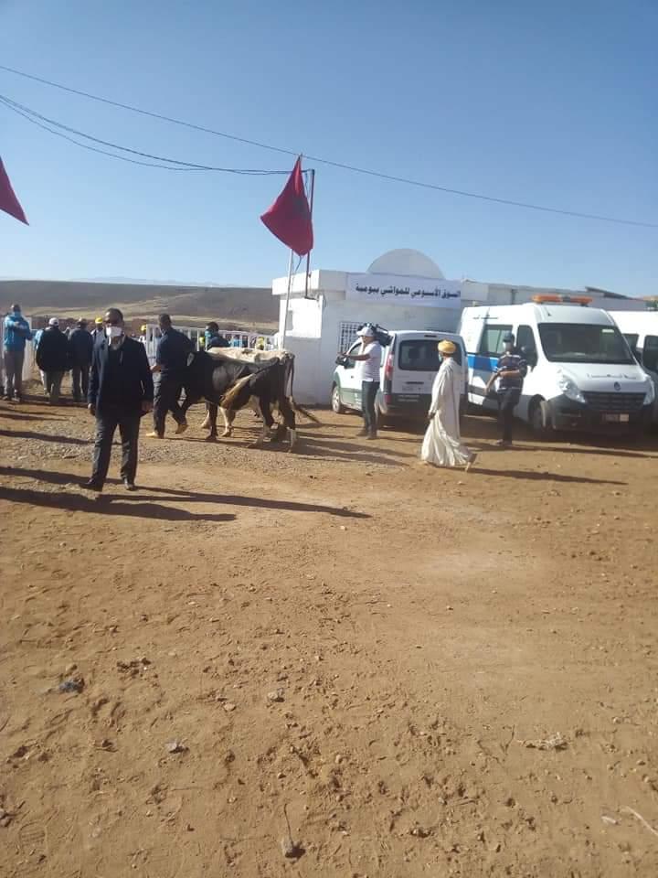 فتح سوق بومية في وجه بائعي المواشي والابقار.