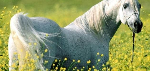 فرس ( أنثى الحصان) تقتل طفل يبلغ من العمر12 سنة ببولعجول.