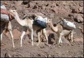 حجزاربعة أطنان من مخدر الشيرا بمنطقة الطاوس باقليم الرشيدية.