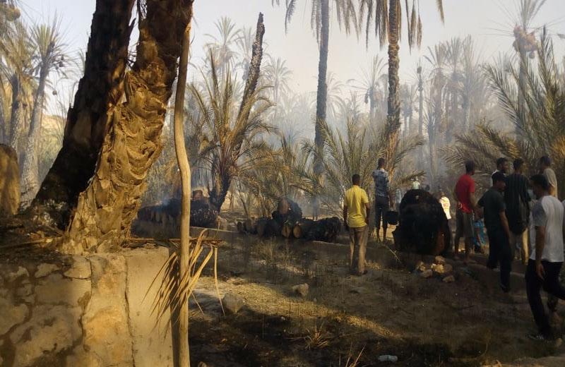 حرائق تأتي على المئات من أشجار النخيل بواحة أولاد شاكر بالرشيدية بعد زاكورة.